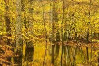 Herfstbos in het water
