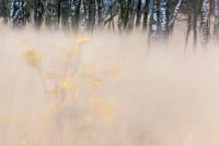 Wind in het Wierdense veld