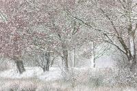 Eiken in de sneeuw