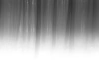 Bewegend bos in zwart wit